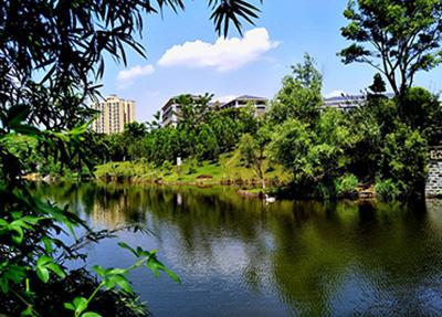校园风景3.jpg