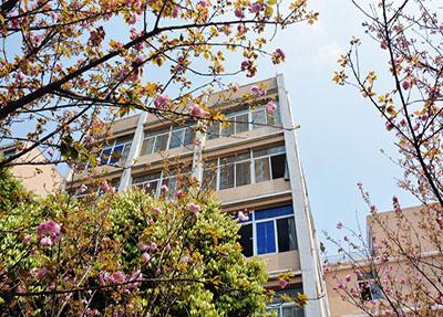 樱花中的校园