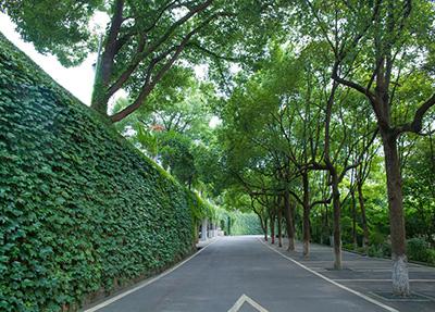 19年重庆青年职院单招多少分能考过?
