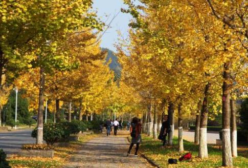 2020年肥城市职业中等专业学校录取分数线是多少