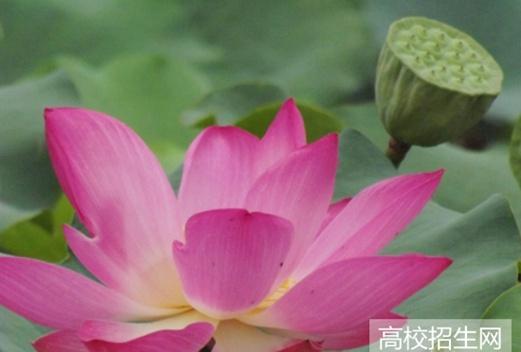 河南师范大学图片