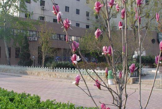 天津医科大学基础医学院
